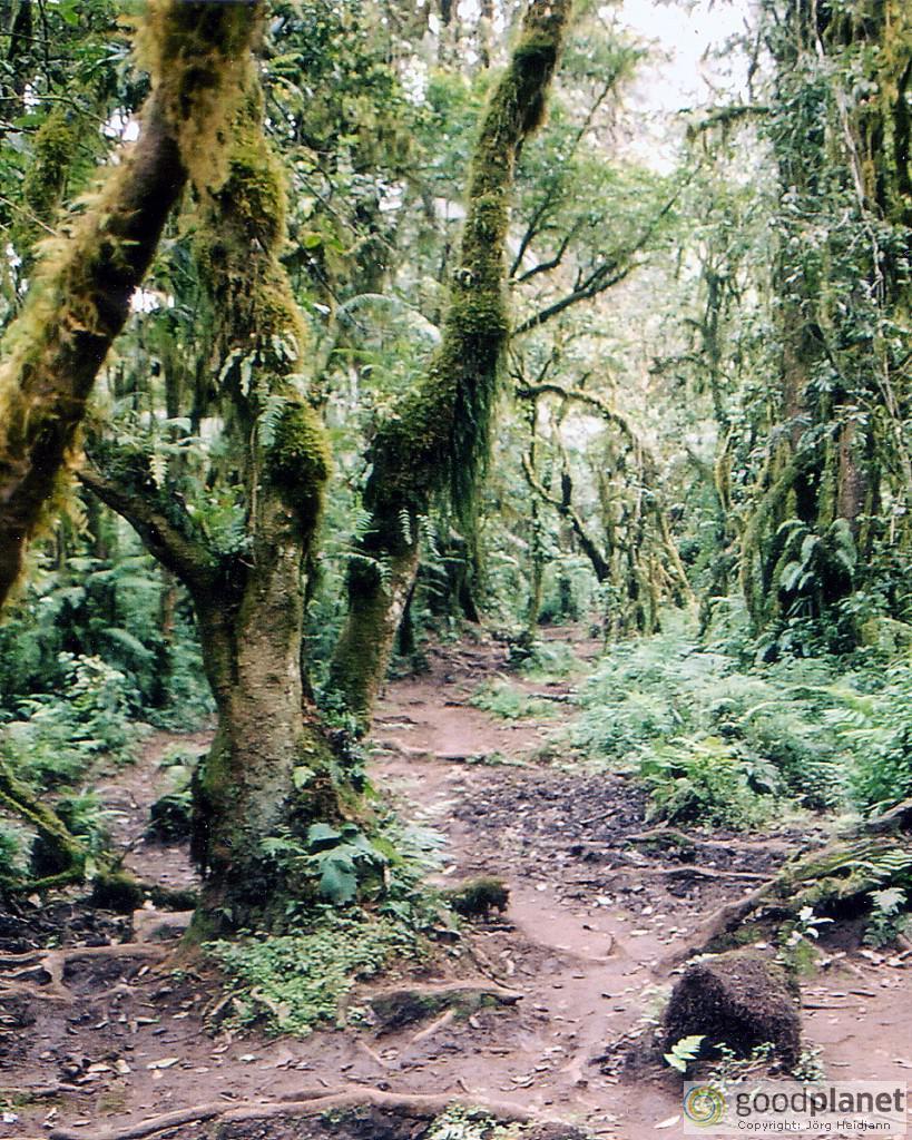 Regenwald am Fuß des Kilimandscharo bei Moshi