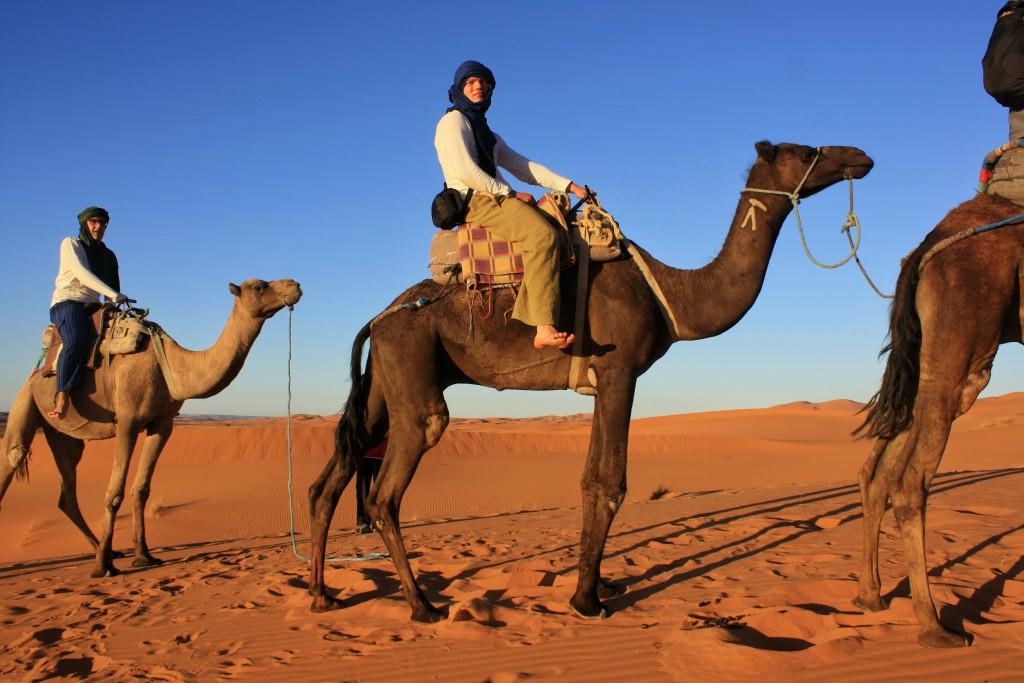 Marokko-Wüste-Kamel