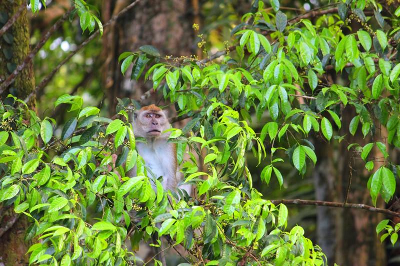 Neugieriges Äffchen im Dschungel