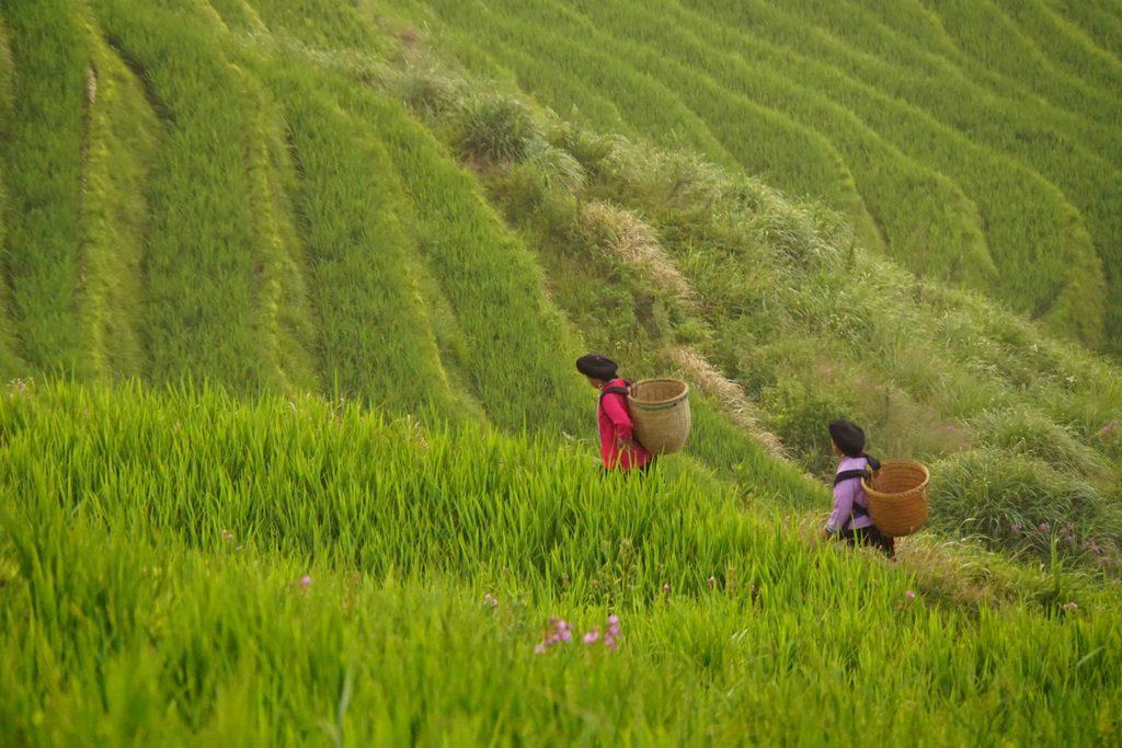 Frauen in den Longi Reisterrassen, China